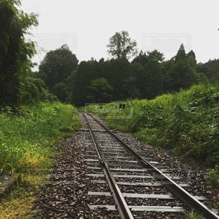 雨,森,線路,砂利,梅雨,天気,雨の日