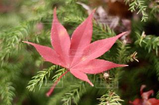 ピンクの花植物が付いている木 - No.892003