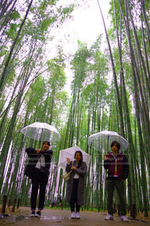 自然,雨,京都,竹林,嵐山,雨降り,下から,インスタ映え,雨の京都,雨の竹林,角度良い