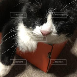 猫の写真・画像素材[2068391]