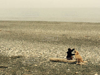 ビーチ,夕暮れ,散歩,浜辺,ゴールデン ・ リトリーバー,犬と息子