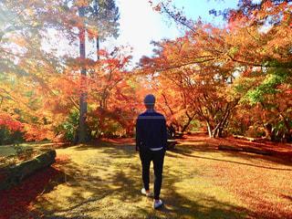 自然,アウトドア,絶景,紅葉,太陽,後ろ姿,山,人物,背中,人,後姿,旅,休日,ゆっくり,四季,リフレッシュ