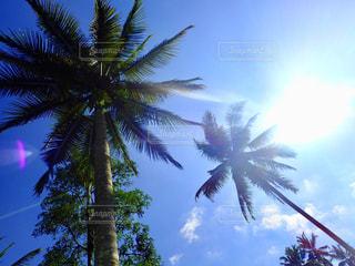 ハワイの空の写真・画像素材[2877946]