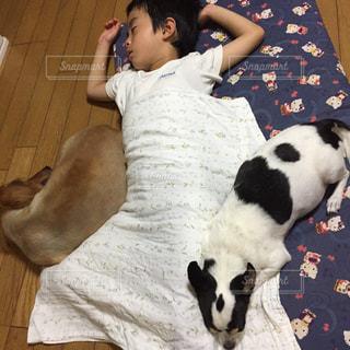 犬たちの昼寝の写真・画像素材[2055285]