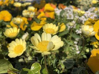 黄色い花のクローズアップの写真・画像素材[3041632]