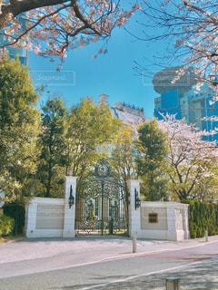 緑と桜の中のお城❤️の写真・画像素材[1920716]