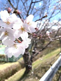 近くの花のアップの写真・画像素材[1910576]