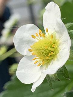 近くの花のアップの写真・画像素材[1932902]