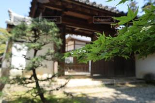 建物の隣の木の写真・画像素材[2265749]