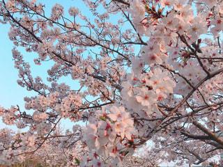 春の写真・画像素材[2048793]