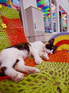 カラフルな毛布の上に横たわる猫の写真・画像素材[2347786]