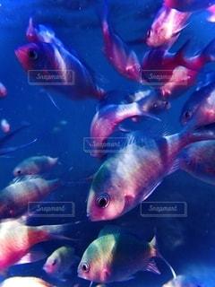 沖縄の魚たちの写真・画像素材[2627477]