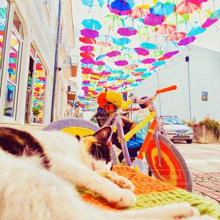 猫,動物,傘,海外,鮮やか,オレンジ,ペット,人物,ポルトガル,カラー,ネコ