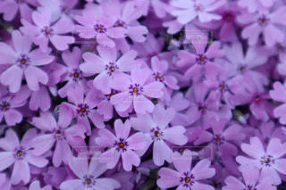 花の写真・画像素材[2027866]