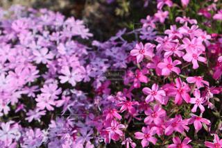 花の写真・画像素材[2029332]