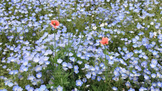 花の写真・画像素材[2029341]