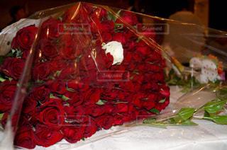 99本の赤い薔薇に1輪の白い薔薇の写真・画像素材[2032268]