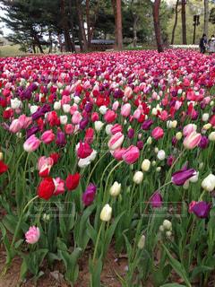 花の写真・画像素材[2044826]