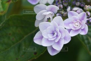 花の写真・画像素材[2050283]