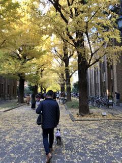 秋の散歩の写真・画像素材[2562422]