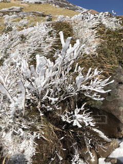 雪,水滴,雪山,山,登山,山登り,結晶,霧氷