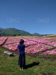 花畑の写真・画像素材[2282306]