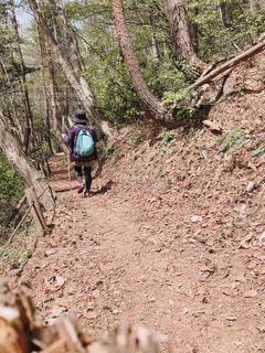 春,後ろ姿,トレッキング,登山,山ガール