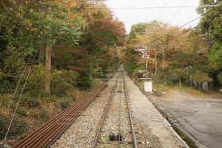 自然,秋,紅葉,茶色,山,モノレール,ベージュ,お出かけ,ミルクティー色