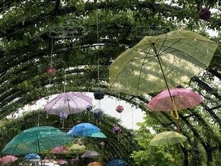 花,雨,傘,水滴,梅雨,天気,雨の日