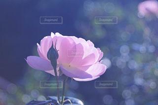 花と玉ボケの写真・画像素材[2806883]