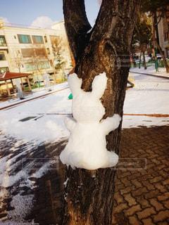 うさぎ,雪,後ろ姿
