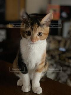 女性,猫,動物,かわいい,ペット,子猫,人物,見つめる,ネコ,見つめる猫