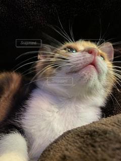 女性,猫,動物,かわいい,ペット,子猫,人物,ネコ