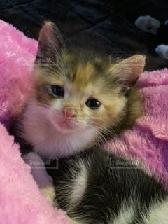 女性,子ども,家族,猫,動物,かわいい,ペット,ぬいぐるみ,子猫,人物,毛布,ネコ,ネコ科の動物