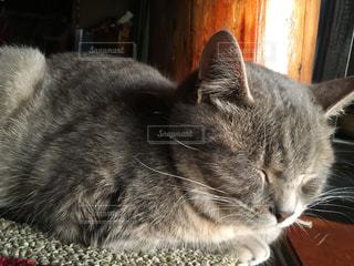 猫,動物,ペット,子猫,人物,寝る猫,ネコ