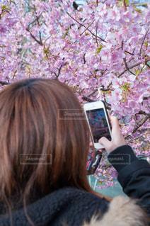 No.341351 桜