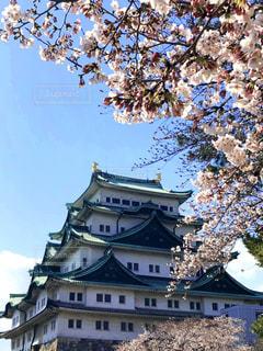 名古屋城の写真・画像素材[2007794]