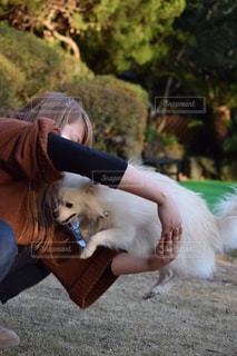 犬,風景,動物,ポメラニアン,芝生,白,ジャンプ,散歩,手,いぬ,人物,人,地面,dog,ハイキング,ドッグラン,わんちゃん,私,1歳,一歳,芸
