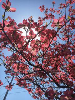 春の写真・画像素材[402691]