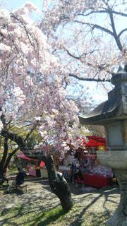 春の写真・画像素材[402711]