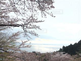 春の写真・画像素材[402733]
