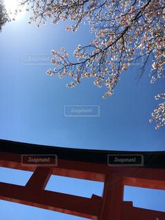 春の写真・画像素材[402752]