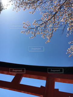 春 - No.402752