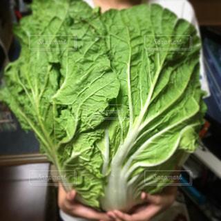 野菜の写真・画像素材[521062]