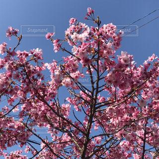 身近な春の写真・画像素材[2011994]