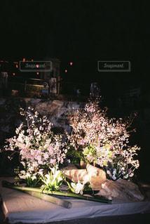 花の写真・画像素材[2024176]