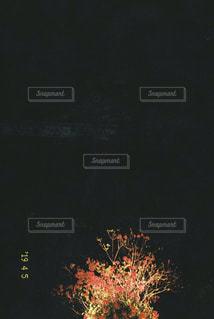上部に薄ら と高知城が写っておりますの写真・画像素材[2024217]