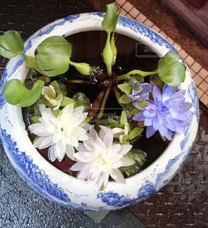 花の写真・画像素材[2143000]