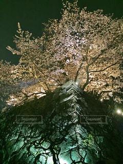 春の写真・画像素材[405742]