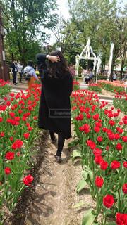 夏,お花,チューリップ,人物,旅行